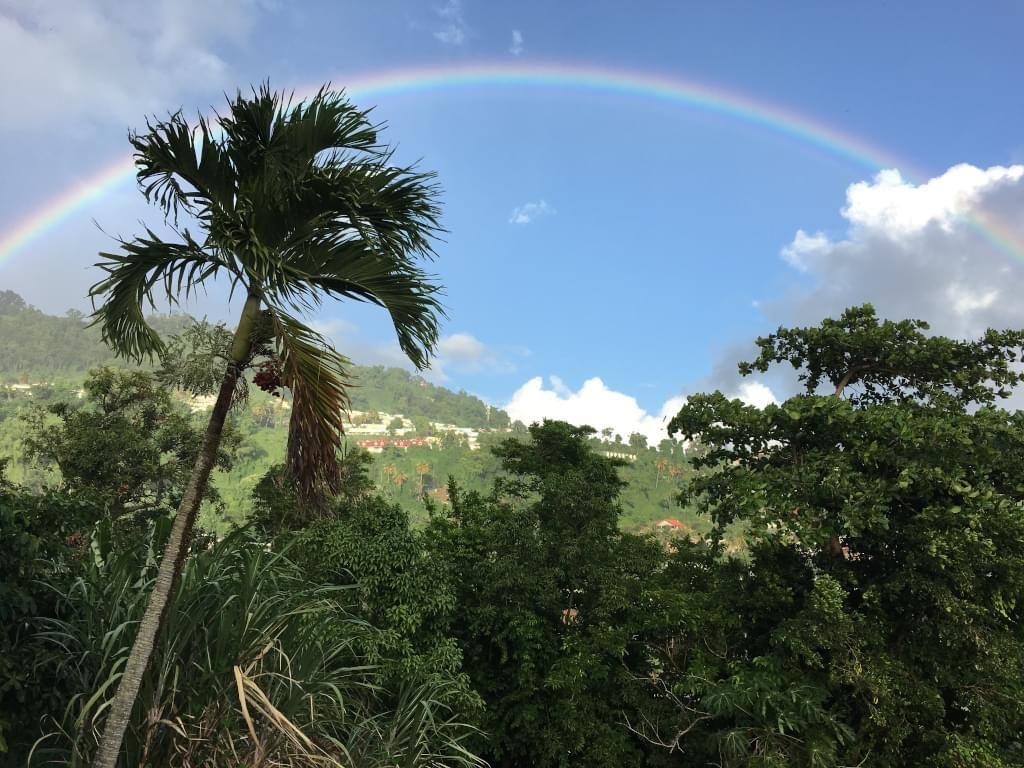 Arc en ciel palmier en Guadeloupe